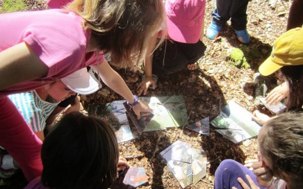 Pedagogía forestal