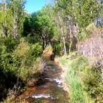El modesto río Tajuña (puente de Barriopedro)